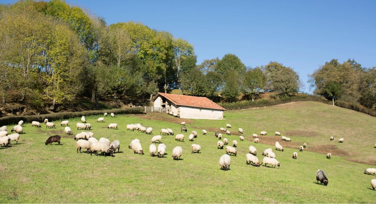 El largo caminar de los pastores